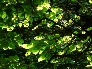 Leafscape 2: Shots taken through an overhead canopy of leaves, sparkling with colour and light.