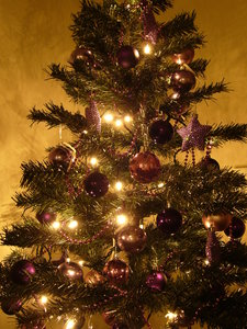 Graham's Christmas Tree 8