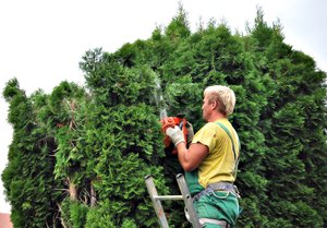 Gardener at work: Gardener at work cutting trees