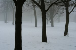 winter: misty winter trees. December 31 2010.