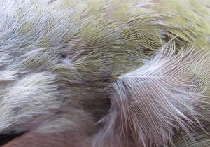 feathers: greenish feathers texture