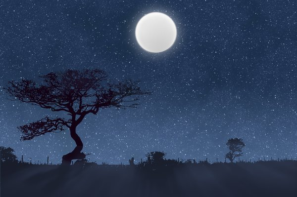 Moonlight Shadows: Trees, bushes and fence silhouetted against a stary sky and full moon.  Illustration.