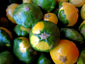 mini squash: bulk quantity of small green and yellow button squash