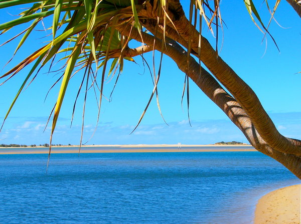 Paradise 5: Semi-tropical beach on the coast of Queensland at Cotton Tree, Australia. Framed by pandanus trees and a glorious sky. Truly Paradise!