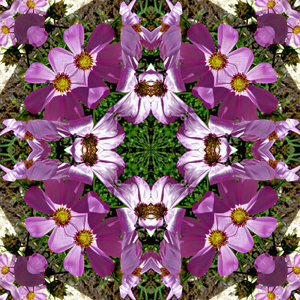 purple bloom garden square1b: abstract backgrounds, textures, patterns, geometric patterns, shapes and perspectives from altering and manipulating image