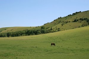 South Downs Meadows