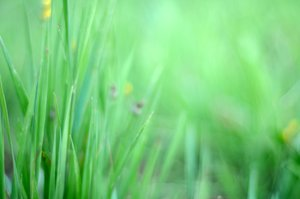 Grass: green summer grass