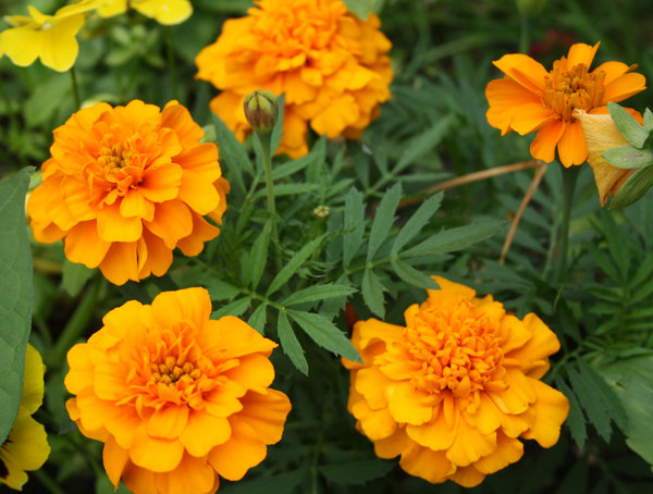 flores de color naranja: