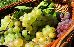 Basket of grapes 3