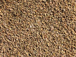 organic aniseed texture: organic aniseed texture