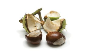Chestnut: Chestnuts (found on our sunday-bike-trip)
