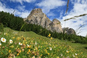 Mountain flower meadow: A flower meadow in the Dolomite mountains, Italy.