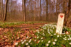 The heart of spring - HDR: Spring in the forest with anmones and a post with a carved red heart showing a path good run run along.