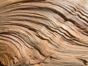 Wood Waves: Close up of a piece of wood