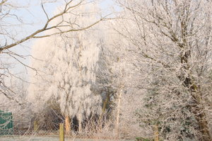 winter: Frozen snow on trees