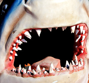 a mouthful 2: life-sized artificial model of shark's jaws and head