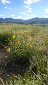 June: Some wild flowers in Bear Creek Lake Park, CO.