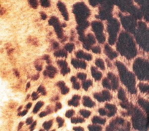 leoparad fabric: none