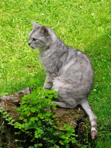 cat in the garden: none