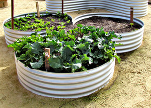 community garden: various plants in community garden plots
