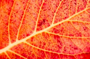 Autumn color: Fall leave close up