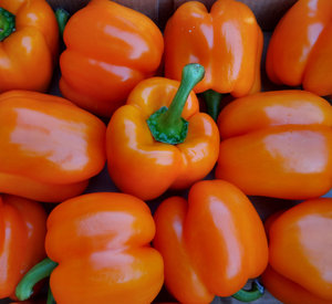 fresh orange capsicums1