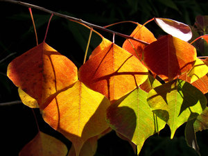 light & shadow autumn leaves2