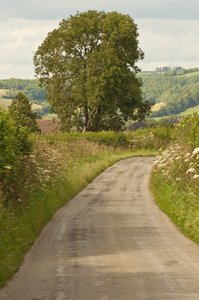 Country Lane: Rural country lane in the UK