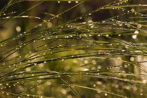 Morning Dew: Dew hanging onto plants