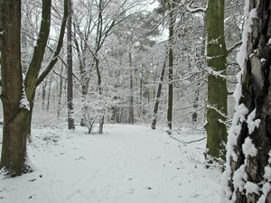 idyllic winter forest