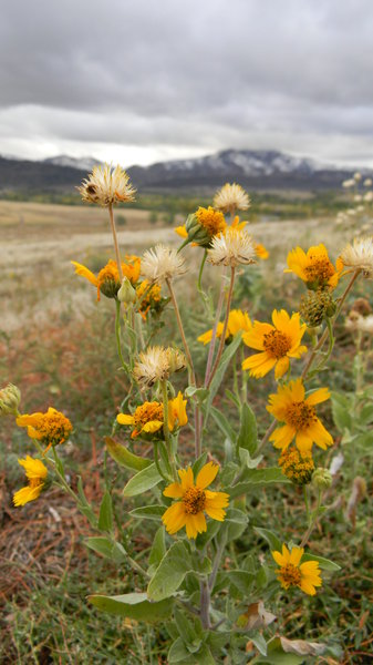 Beauty & Strength: Wildflowers in my favorite park today, the day of the first snow. 10/08/2011.