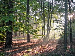 autumn forest light 2