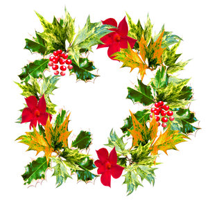 Holly Wreath: Holly wreath with red flowers and berries