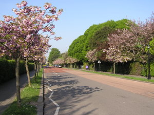 Parkway: A parkway in London, near Regent's park, with a trees blooming.