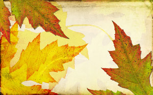 Leaf Collage 2