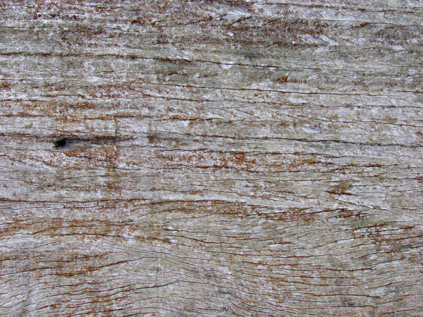 timber textures3: textures of wall timbers of old wooden shack