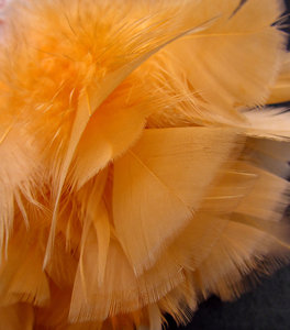 orange feathers & fluff1: bundle of fine and fluffy orange feathers