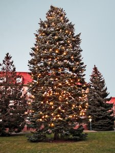 huge christmas tree 2