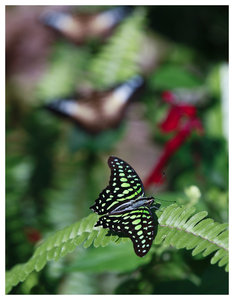 Butterfly garden: Butterfly garden located in Gainesville Florida