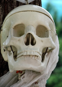 medical model1: plastic medical model of human skeleton/skull used for Haloween display