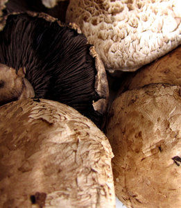 mushroom textures3: cultivated brown mushrooms