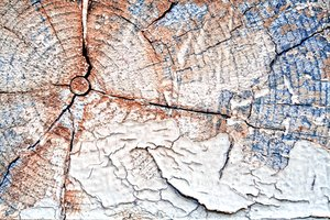 Cracked Wood Texture: Close-up cracked wood texture.