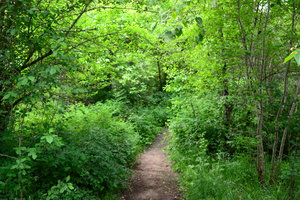 Mountain Forest Path: Mountain Forest Path