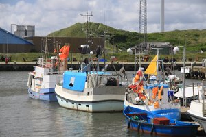 Harbour: Fishing boats in a harbour