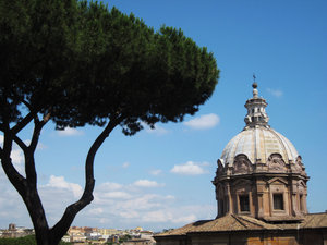 Tree in Rome: no description