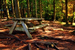 Forest Picnic Table - HDR