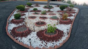 Rock Garden: Plants and Rock Garden
