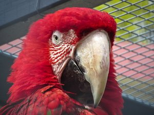red-and-green macaw 2