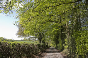 Rural lane in spring: A rural lane in Oxfordshire, England, in spring.