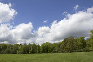 Field, forest and sky